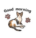 いろんな三毛猫♪.(個別スタンプ:03)
