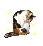 いろんな三毛猫♪.(個別スタンプ:12)