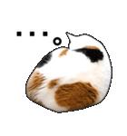 いろんな三毛猫♪.(個別スタンプ:14)