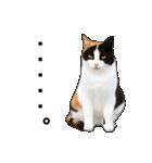 いろんな三毛猫♪.(個別スタンプ:15)