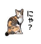 いろんな三毛猫♪.(個別スタンプ:17)