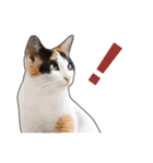 いろんな三毛猫♪.(個別スタンプ:19)