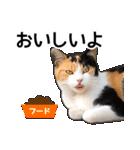 いろんな三毛猫♪.(個別スタンプ:21)