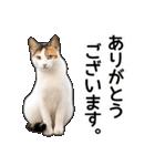 いろんな三毛猫♪.(個別スタンプ:24)