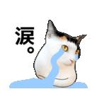 いろんな三毛猫♪.(個別スタンプ:32)