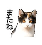 いろんな三毛猫♪.(個別スタンプ:33)