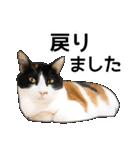 いろんな三毛猫♪.(個別スタンプ:35)