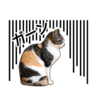 いろんな三毛猫♪.(個別スタンプ:37)