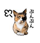 いろんな三毛猫♪.(個別スタンプ:38)