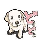 ばな菜のラブラドール仔犬(個別スタンプ:02)