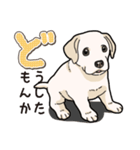 ばな菜のラブラドール仔犬(個別スタンプ:03)