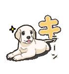 ばな菜のラブラドール仔犬(個別スタンプ:04)