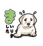 ばな菜のラブラドール仔犬(個別スタンプ:05)