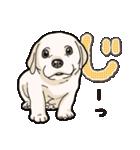 ばな菜のラブラドール仔犬(個別スタンプ:08)