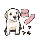 ばな菜のラブラドール仔犬(個別スタンプ:09)