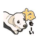 ばな菜のラブラドール仔犬(個別スタンプ:13)