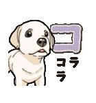 ばな菜のラブラドール仔犬(個別スタンプ:14)