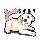 ばな菜のラブラドール仔犬(個別スタンプ:16)