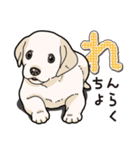 ばな菜のラブラドール仔犬(個別スタンプ:23)