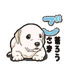 ばな菜のラブラドール仔犬(個別スタンプ:26)