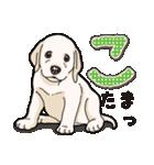 ばな菜のラブラドール仔犬(個別スタンプ:27)