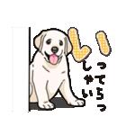 ばな菜のラブラドール仔犬(個別スタンプ:34)