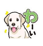 ばな菜のラブラドール仔犬(個別スタンプ:37)