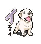 ばな菜のラブラドール仔犬(個別スタンプ:38)