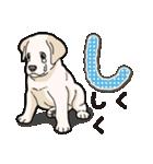 ばな菜のラブラドール仔犬(個別スタンプ:39)