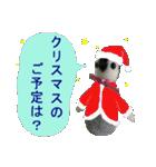 羊毛フェルトペンペンシリーズ クリスマス(個別スタンプ:4)