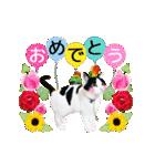 動くねこ!誕生日&毎日言葉&イベント(個別スタンプ:05)