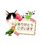 動くねこ!誕生日&毎日言葉&イベント(個別スタンプ:15)