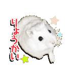 ハムスター☆だいふく ver.1(個別スタンプ:01)