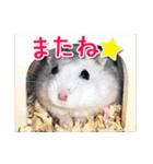 ハムスター☆だいふく ver.1(個別スタンプ:04)