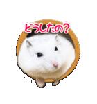 ハムスター☆だいふく ver.1(個別スタンプ:05)