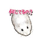 ハムスター☆だいふく ver.1(個別スタンプ:06)