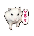 ハムスター☆だいふく ver.1(個別スタンプ:07)