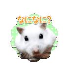 ハムスター☆だいふく ver.1(個別スタンプ:08)