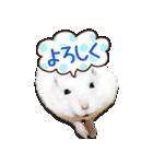 ハムスター☆だいふく ver.1(個別スタンプ:09)