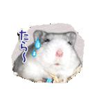 ハムスター☆だいふく ver.1(個別スタンプ:11)