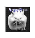 ハムスター☆だいふく ver.1(個別スタンプ:12)