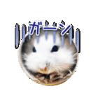 ハムスター☆だいふく ver.1(個別スタンプ:16)