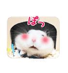 ハムスター☆だいふく ver.1(個別スタンプ:19)