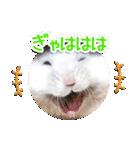 ハムスター☆だいふく ver.1(個別スタンプ:21)