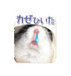 ハムスター☆だいふく ver.1(個別スタンプ:22)