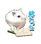 ハムスター☆だいふく ver.1(個別スタンプ:24)
