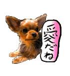 犬トーク!!動物仲間編 写真 吹出し(個別スタンプ:02)