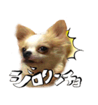犬トーク!!動物仲間編 写真 吹出し(個別スタンプ:05)