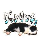 犬トーク!!動物仲間編 写真 吹出し(個別スタンプ:08)