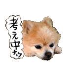 犬トーク!!動物仲間編 写真 吹出し(個別スタンプ:12)